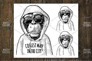 Monkey hipster in hoodie