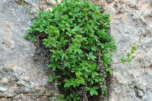 A plant growing on a rock