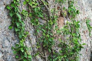 Tree Growing On Rock