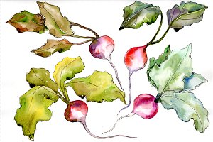 Red radish vegetables PNG watercolor