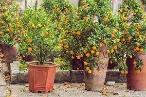 Close up Vibrant orange citrus