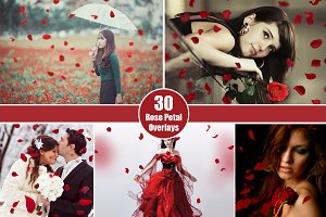 30 Falling Rose Petals Photo Overlay