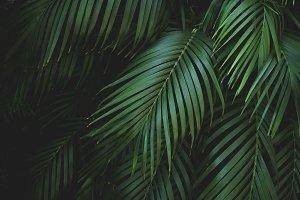 Tropical Palm Leaves Botanical