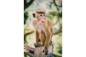 portrait of monkey in jungle