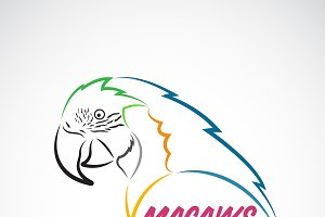 Vector of macaws parrot. Bird.