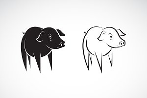 Vector of little pig design. Animal.
