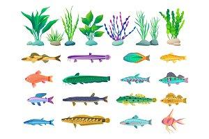 Various Algae and Marine Creatures