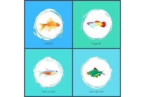 Gold Fish and Neon Tetra Set Vector
