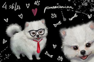 4 styles doggy pomeranian