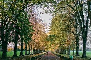 A photo of autumn
