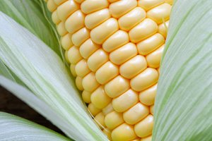 Grains and leaves of sweet corn.