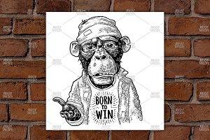 Monkeys begging BORN to WIN