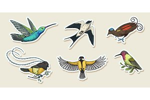 Small birds of paradise