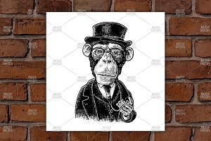 Monkey gentleman. Engraving
