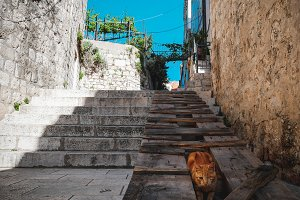 One Eyed Cat in Dubrovnik