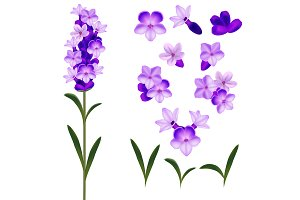 3d Lavender Flowers Set. Vector
