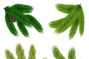 Coniferous Trees Green Branches Set