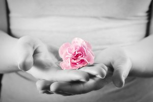 Pink flower in woman hands
