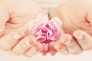 Pink soft flower in woman hands