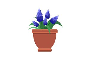 Muscari Room Flower Plant Vector