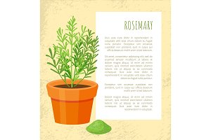 Rosemary Spice Poster and Text