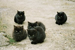 Many black kittens sitting on the gr