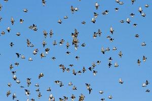 birds fly beautifully along the blue
