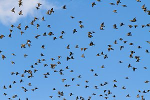 birds fly through the blue sky
