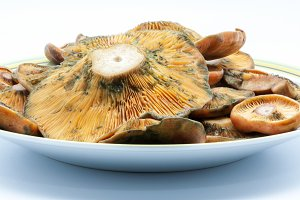 plate of mushrooms