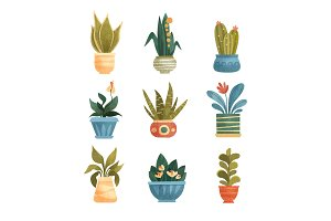 Houseplants in a pots set, elegant