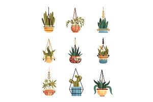 Green hanging indoor house plants
