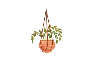 House plant in hanging ceramic