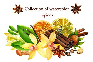 collection of watercolor spices