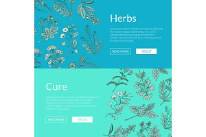 Vector hand drawn medical herbs web