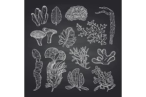 Algae sketch. Vector seaweed set on