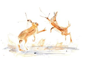 Watercolor Boxing Hares