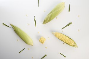 sweet corn cobs with husks