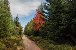 autumn hiking trail with red tree