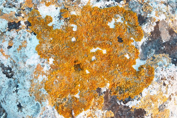 Texture of lichen on the stone.