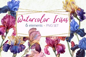 Collection of watercolor irises