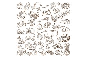 Vector hand drawn pictures of fruits