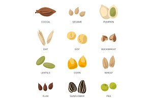 Illustration of different seeds