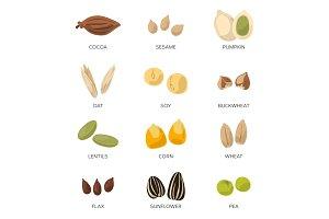 Illustration of different seeds