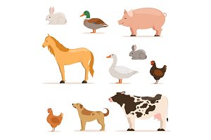 Different domestic animals on farm