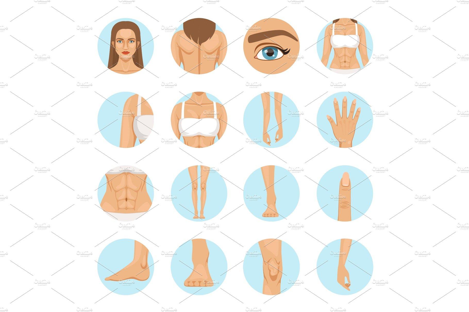 Woman Body Parts Human Anatomy Graphics Creative Market