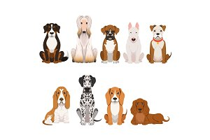 Different breeds of dog. Group of