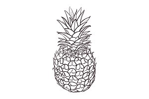 Hand drawn illustration of pineapple