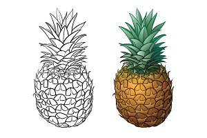 Hand drawn pineapple plus color