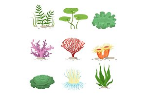 Sea aquatic fauna underwater plants