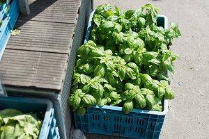 Shiny basil at farmers market